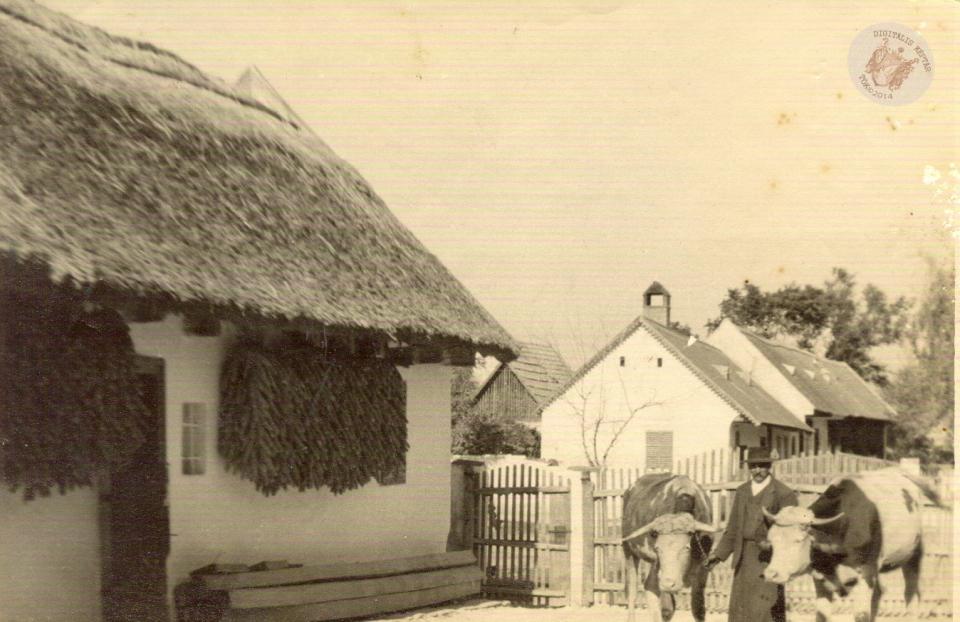 A. HALASI JÓZSEF PORTÁJA 1940 körül